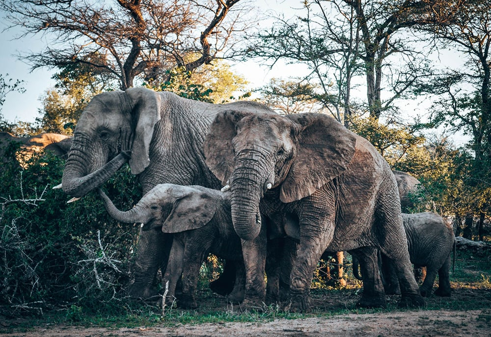 Elephants, National Park, Kenya: one of the cheapest countries in Africa