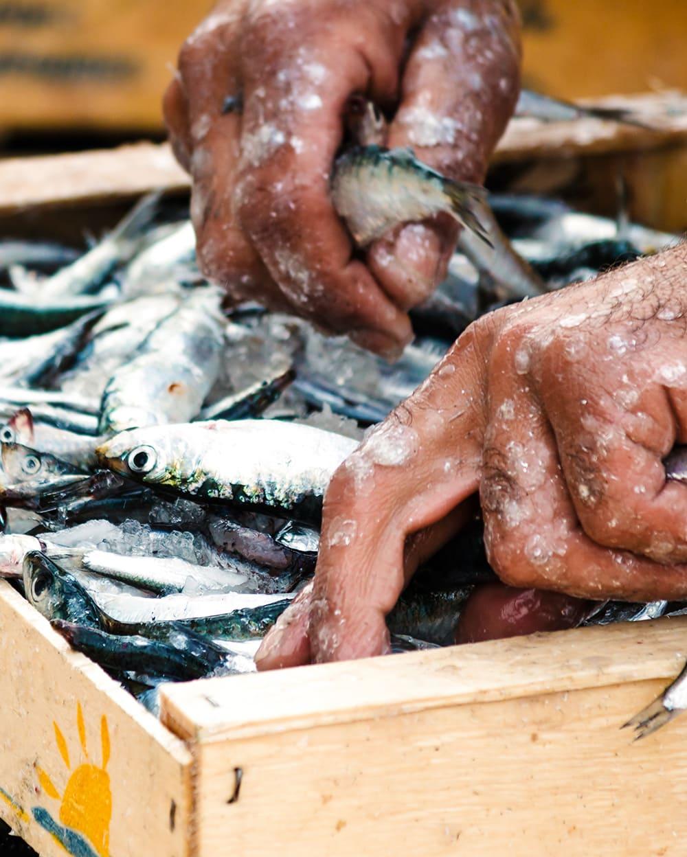 Restaurants in Cinque Terre: fisherman hands with acciughe